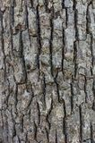 Fond gris d'écorce d'arbre Photographie stock libre de droits