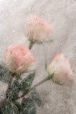 Fond grunge avec des roses Photo libre de droits