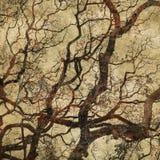 Fond grunge avec des silhouettes d'arbre Image libre de droits