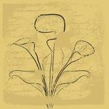 Fond grunge avec la calla illustration stock