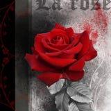 Fond grunge avec la fleur douce de rose de rouge Images libres de droits