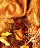 Fond grunge de blé Images stock