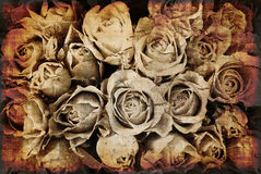 Fond grunge de roses Photographie stock