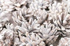 Fond grunge des cônes de pin Objet du pin Cones Images stock