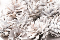 Fond grunge des cônes de pin Objet du pin Cones Photos stock