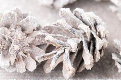 Fond grunge des cônes de pin Objet du pin Cones Images libres de droits