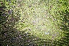 Fond grunge texturisé approximatif Image libre de droits
