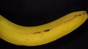 Fond haut étroit de banane clips vidéos