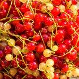 Fond haut étroit de texture de baies de groseille rouge Baies de groseille rouge Baies rouges fraîches d'été Images libres de droits
