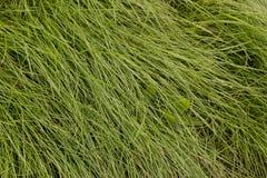 Fond horisontal frais d'herbe verte Images libres de droits
