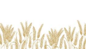 Fond horizontal avec de bl? d'oreilles le bord en bas Contexte d?coratif naturel avec la plante cultiv?e organique de c?r?ale illustration stock