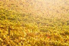Fond horizontal avec les feuilles jaunes de vignes Image stock