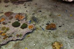 Fond horizontal d'espèce marine sous-marine colorée Images stock
