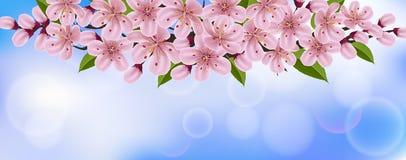 Fond horizontal de ressort avec les fleurs et la branche roses de cerise Photographie stock libre de droits