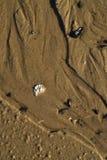 Fond humide de coquille de cailloux de texture de sable de plage photographie stock