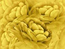 Fond jaune-clair floral Un bouquet des fleurs jaunes Plan rapproché collage floral Image libre de droits