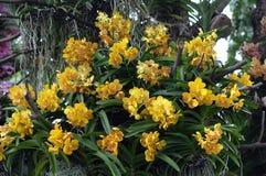 Fond jaune d'orchidées Images stock