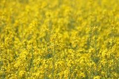 Fond jaune de fleur Photos stock