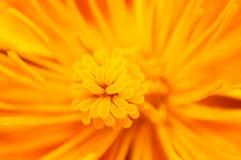 Fond jaune de fleur Image stock