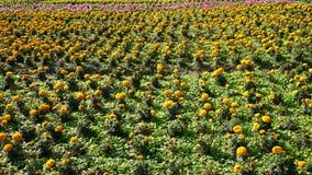 Fond jaune de fleur Photos libres de droits