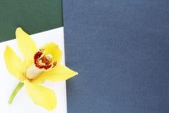 Fond jaune de fleurs de pétales de composition géométrique image stock