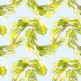 Fond jaune de mimosa Photo stock