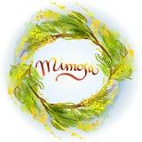 Fond jaune de mimosa Images libres de droits