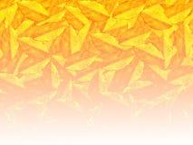 Fond jaune de modèle de feuille de couleur Image libre de droits