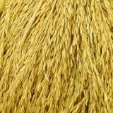 Fond jaune de riz Photo libre de droits