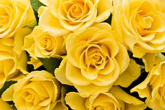 Fond jaune de roses Photos libres de droits