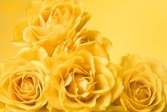 Fond jaune de roses Photo stock