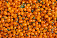 Fond jaune de tomate-cerise Photos stock