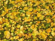 Fond jaune et vert de lames image stock