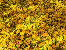 Fond jaune et vert de lames photo stock