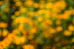 Fond jaune naturel de bokeh Images stock