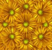 Fond jaune-orange floral Un bouquet des fleurs des gerberas de jaune d'automne Plan rapproché Photos stock