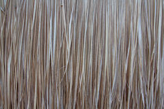 Fond jaune sec d'herbe Image stock