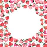 Fond juteux lumineux de fraises avec le croquis blanc de main d'aquarelle de cercle Photographie stock