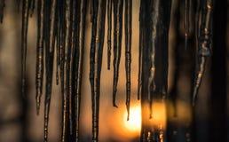 Fond, le soleil naissant sur des glaçons pendant bas du bord de toit Résumé de formation naturelle de glaçon, allumé par lever de Images stock