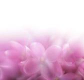 Fond lilas de fleur Le foyer mou de LENSBABY len Photo libre de droits