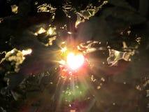 Fond, lumière du soleil et fusée abstraits de nature par des feuilles Images stock