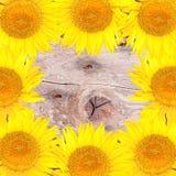 Fond lumineux avec les tournesols jaunes Photo stock