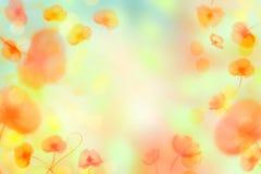 Fond lumineux de fleur avec des pavots images libres de droits