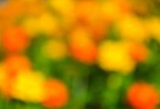 Fond lumineux jaune naturel de tache floue Photo libre de droits