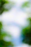 Fond lumineux vert naturel de tache floue de forêt ensoleillée d'été Images stock