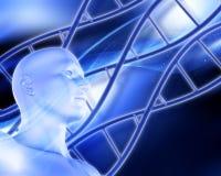 Fond médical avec les brins d'ADN et le chiffre masculin Photos stock