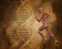 Fond médical grunge avec l'homme 3D courant avec des brins d'ADN Image stock
