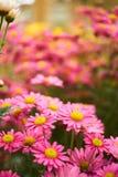 Fond magenta rose de bokeh de fleur Photographie stock