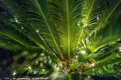 Fond magique de plante verte avec des lampes-torches Images libres de droits