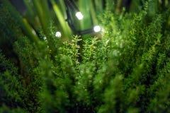 Fond magique de plante verte avec des lampes-torches Image stock